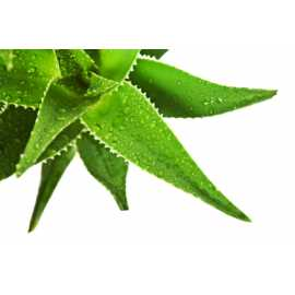 Aloe - antialergický 10ml