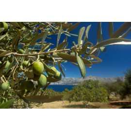 Olivový háj 10ml