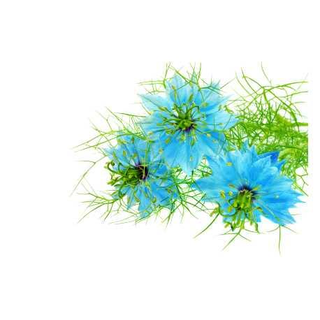 Damašský květ 10ml