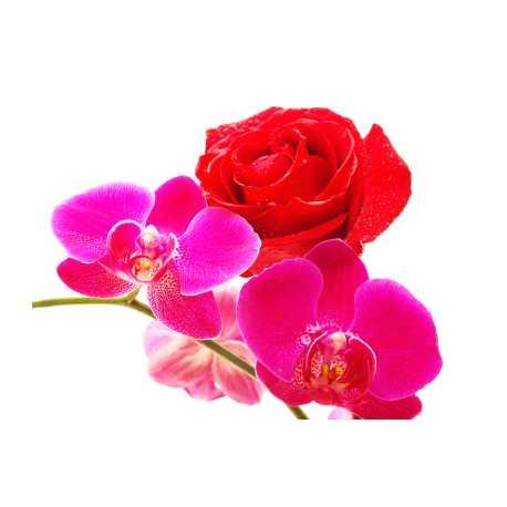 Jasmín + růže + orchidej 10ml