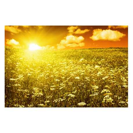 Jantarové slunce - antialergický 10ml