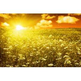 Jantarové slunce - antialergický 200ml