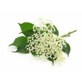 Bez černý - antialergický - parfémová kompozice 10ml