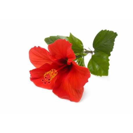 Ibišek + růže - parfémová kompozice 10ml