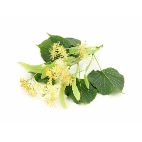 Lípa - antialergický - parfémová kompozice 10ml